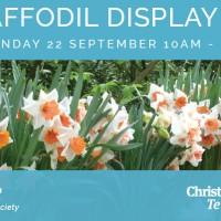 Spring Daffodil Display