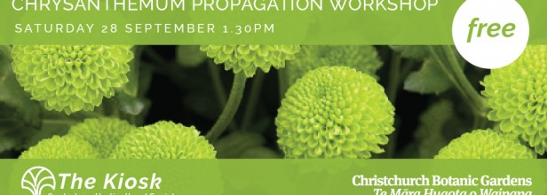 Chrysanthemum Propagation Workshop