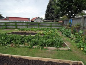 Community Garden. 'Grow Project'. [ChCh South Tongan Methodist Parish]