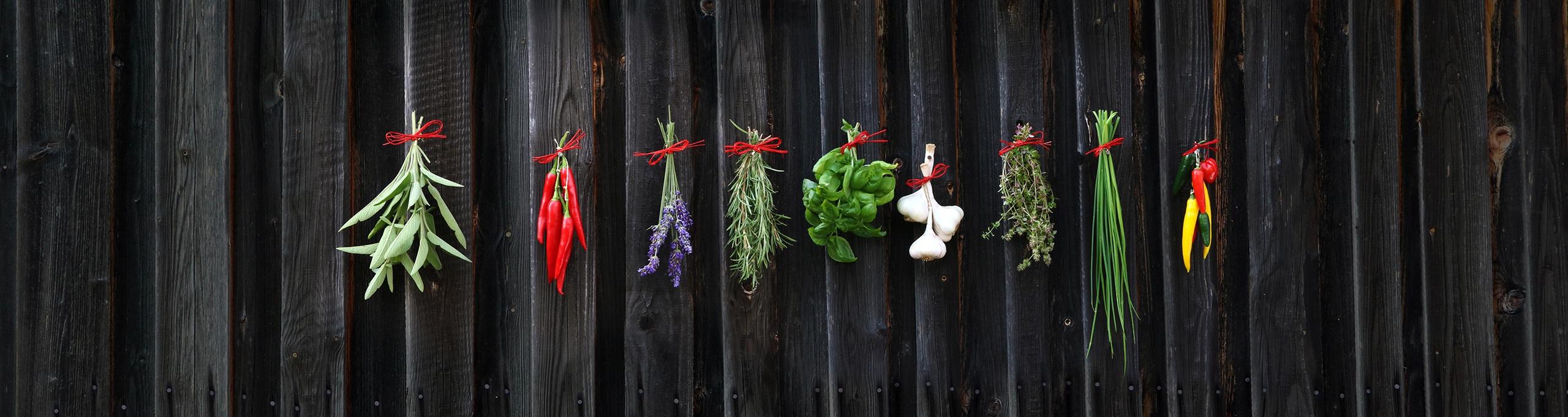 Herb of the Month – Puarangi – Native Hibiscus Hibiscus trionum