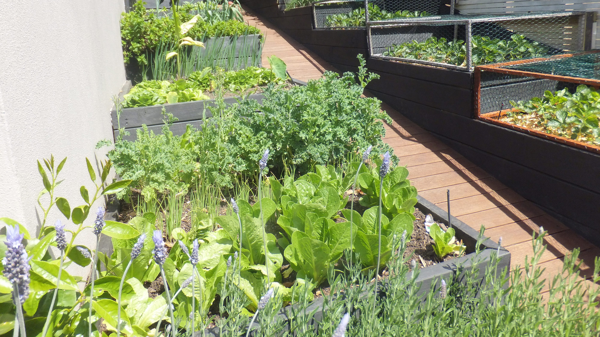 Microclimates in the Garden